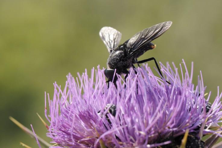 Tiques, taons, aoûtats… 10 astuces pour lutter et soulager les piqûres d'insectes – Moustiquaire ANTI INSECTES