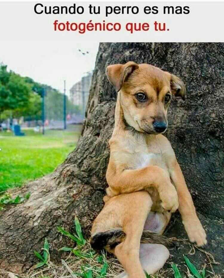 Mas Pinton Expertoanimal Mundoanimal Reinoanimal Animales Naturaleza Mascotas Animalesdec Chistes De Perros Memes De Perros Chistosos Perros Graciosos