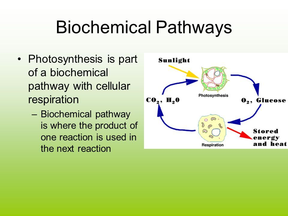 Biochemical Pathway Of Cell Respiration Flow Chart Luxury Synthesis
