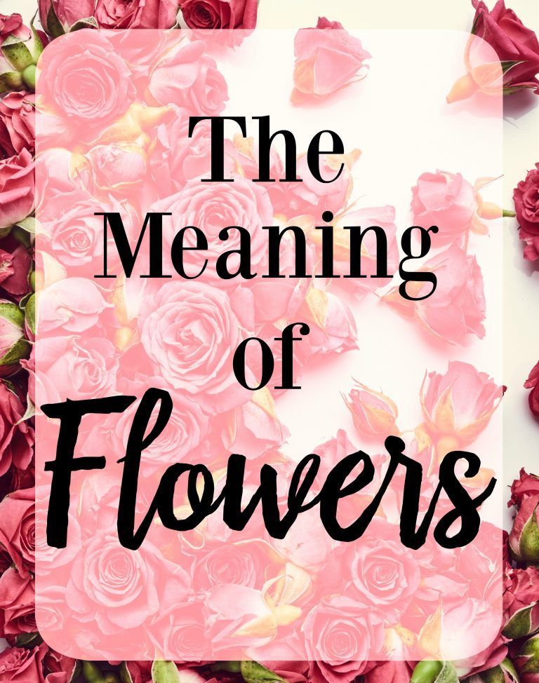 The Meaning of Flowers, Meaning of Color Roses, What do