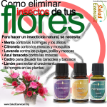 Remedios caseros de Aceites Esenciales contra los hongos de las uñas y pies
