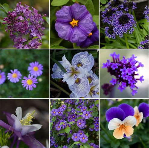 17 Best 1000 images about Pretty Purple Flowers on Pinterest Gardens