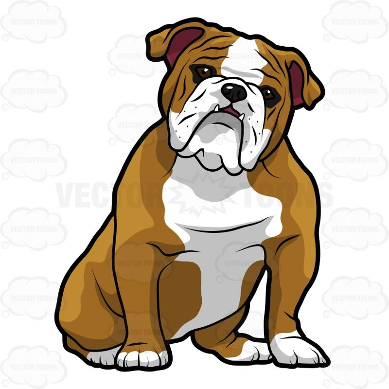 english bulldog sitting with its head tilted to the right majo rh pinterest com english bulldog cartoon english bulldog clipart free
