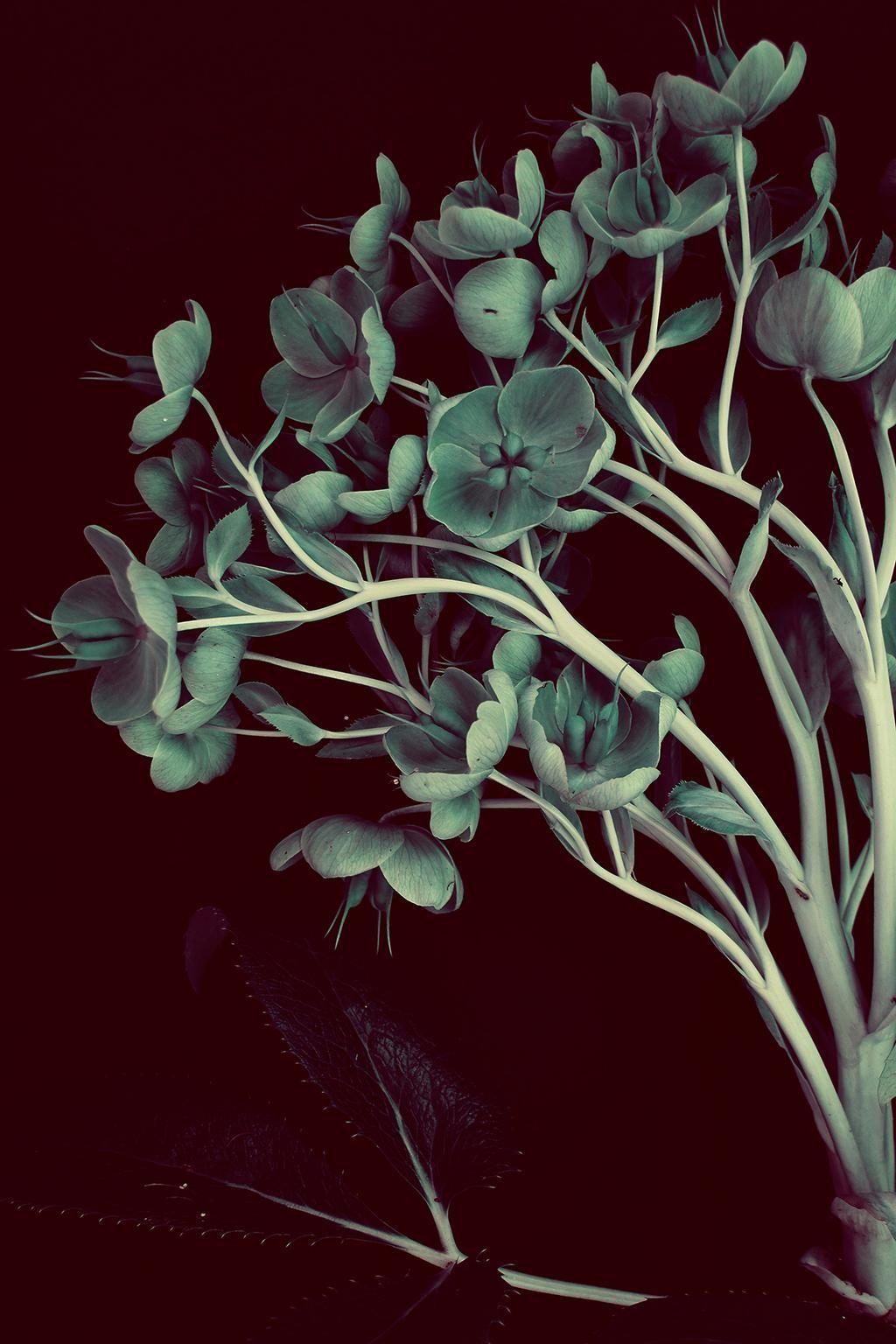 King Hellebore | Van Lieshout VI 2015 > #digital art #photography