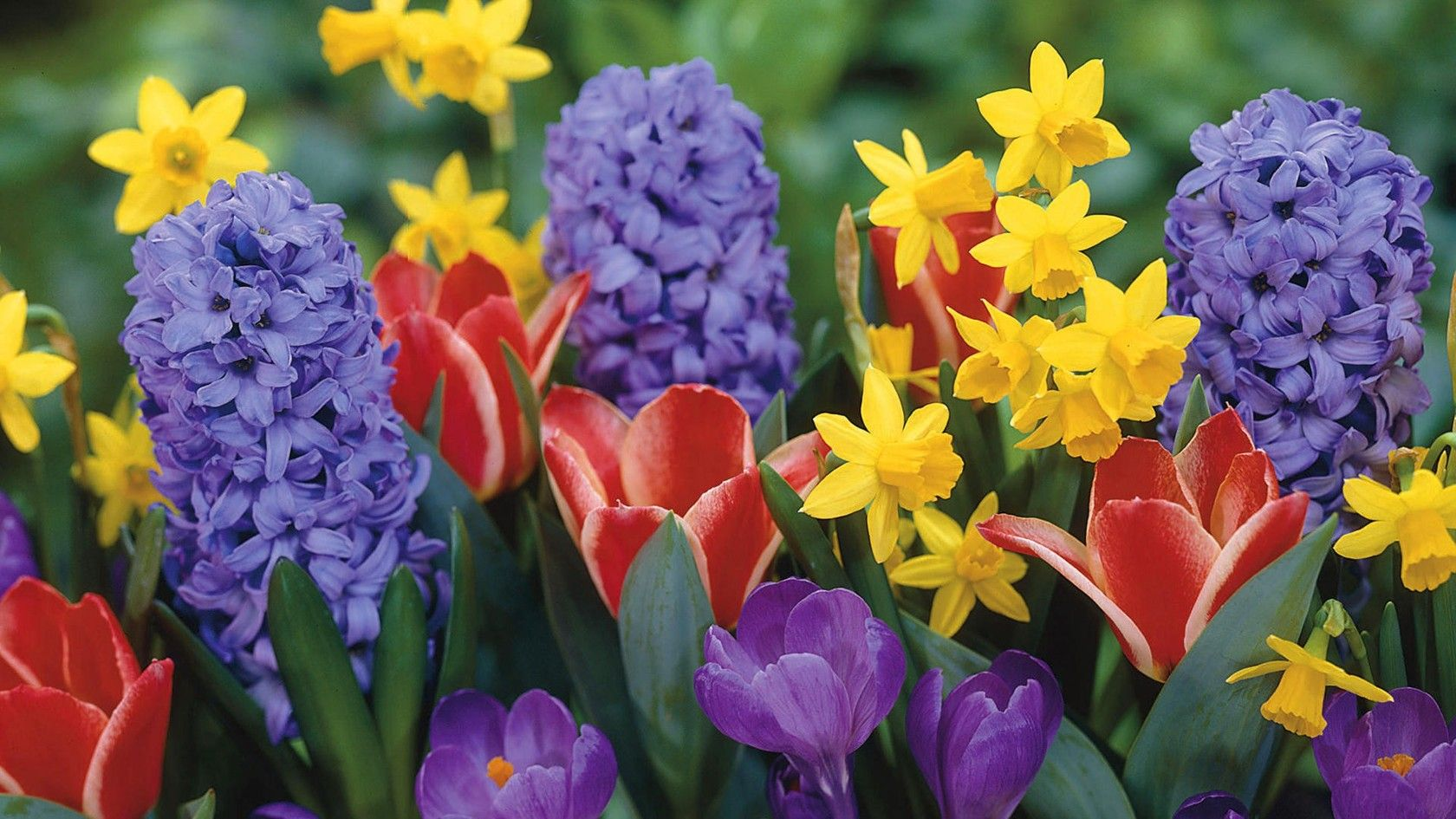 Download Spring Flowers 14127 1680x945 Px High Resolution