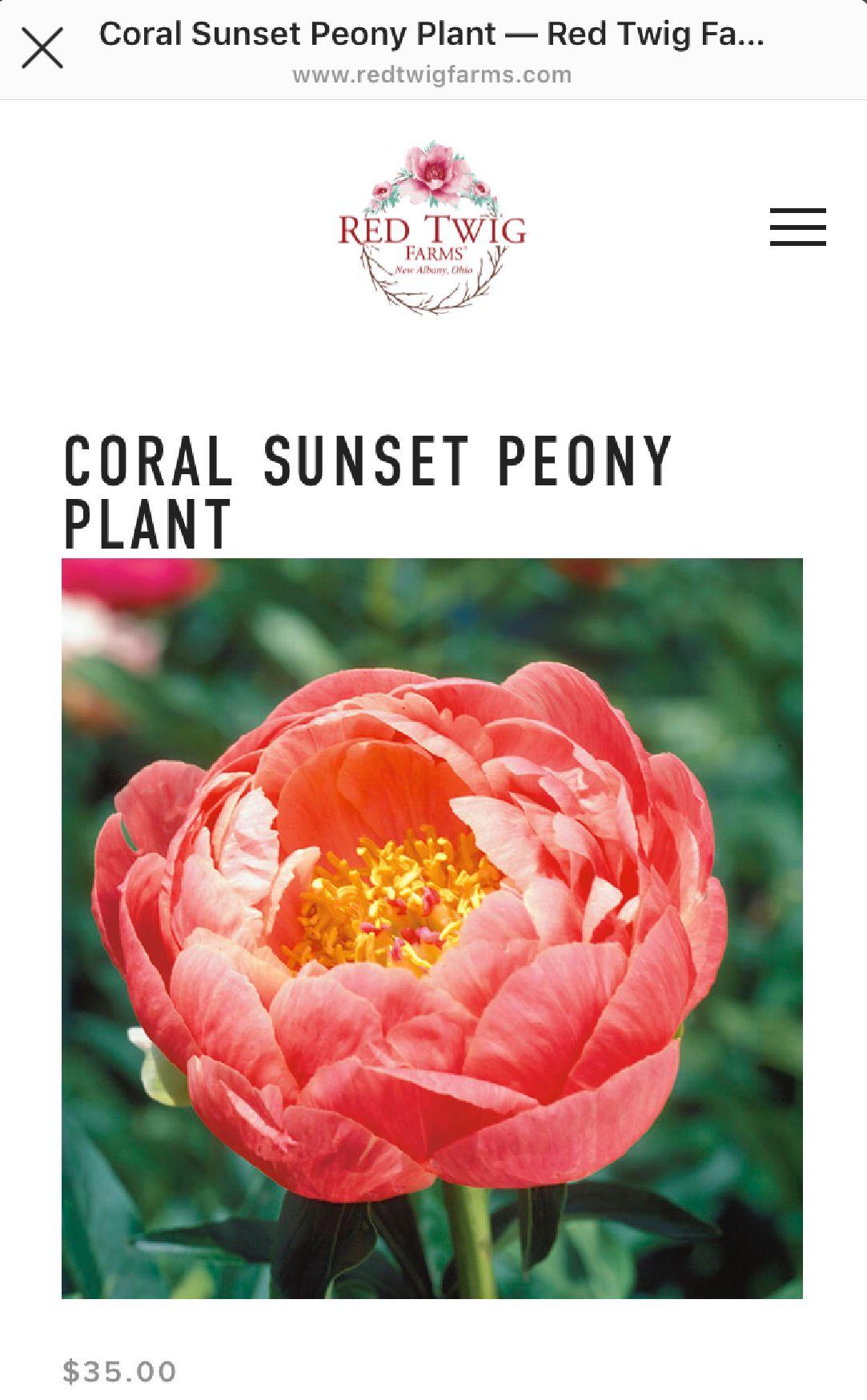 Pin by Linda Scott on Flower Cart Planting peonies