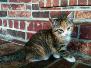 Adopt Meenie On Petfinder Animals Friends Calico Cat Animals