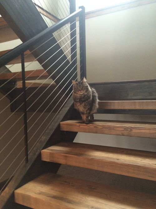Open Stairs Glulam Treads Cable Railing My Projects In