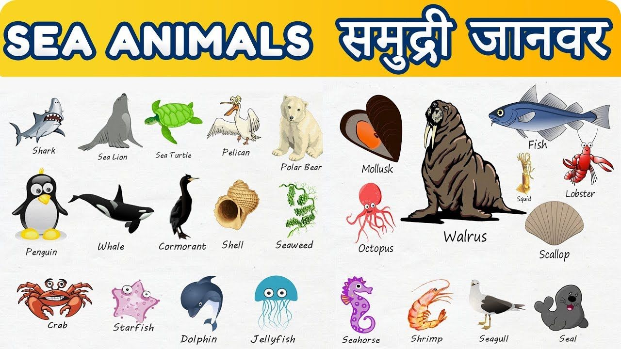 Sea Animals With Pictures Animals For Kids Kids
