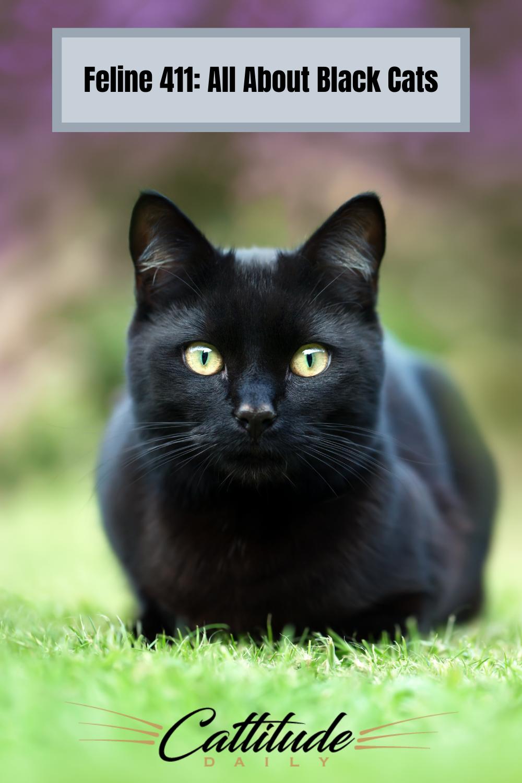 Black Cat Facts In 2020 Black Cat Breeds Cat Facts Cat Breeds