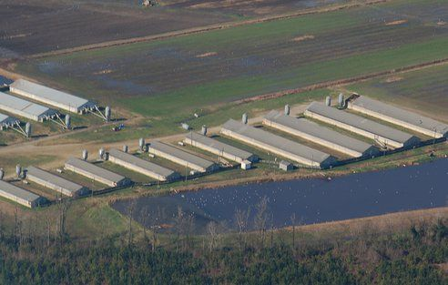Factory Farms Decreasing in Number But Increasing In Size: 20% Growth In 5 Years : TreeHugger