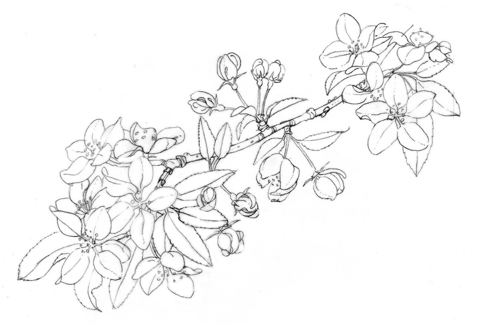 через готические картинки для раскрашивания цветок жасмин придумываю