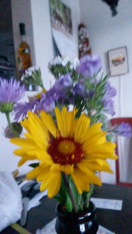 Some Wild Flowers for My Love ...