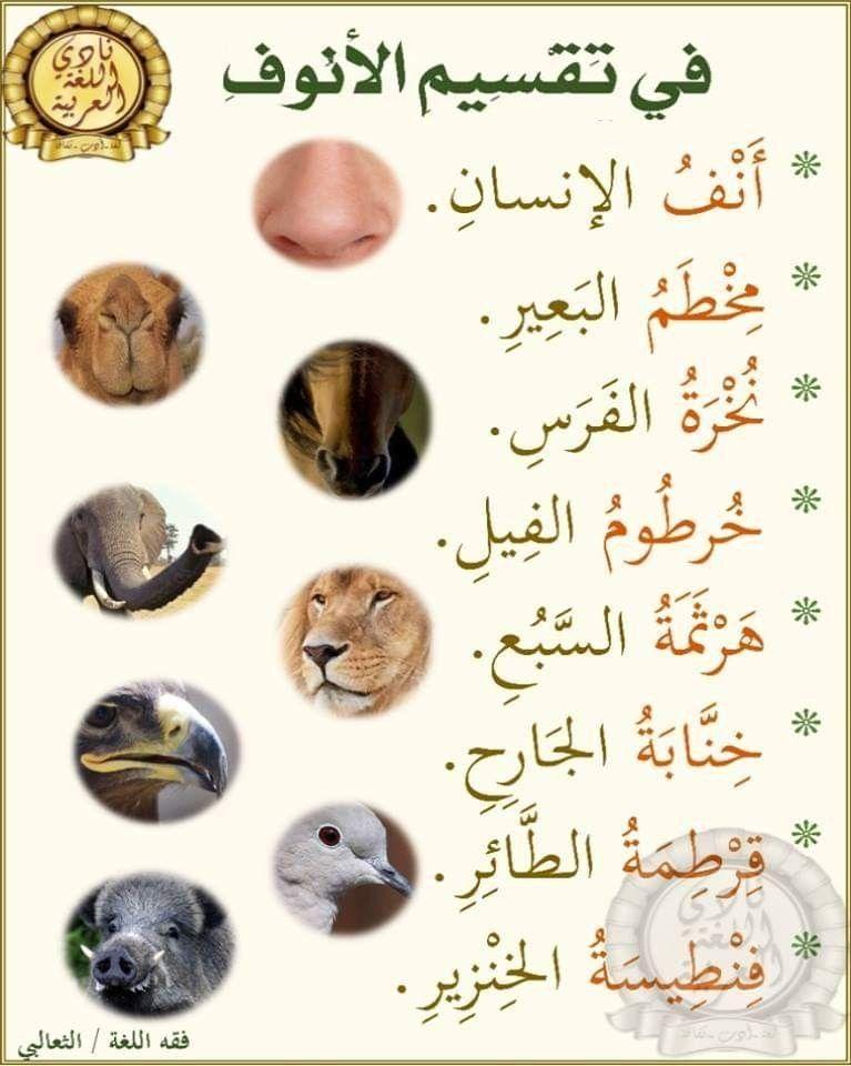 Pin By Maysaa Qublawi On هل تعلم Science Quotes Learn Arabic Language Arabic Langauge