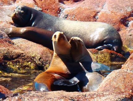 Sea Lions near La Paz, Baja California Sur, Mexico. Picture from https://www.facebook.com/pages/Fun-Baja/277638142255371
