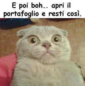 Foto Spiritose Di Gatti Cerca Con Google Cazzate Divertenti