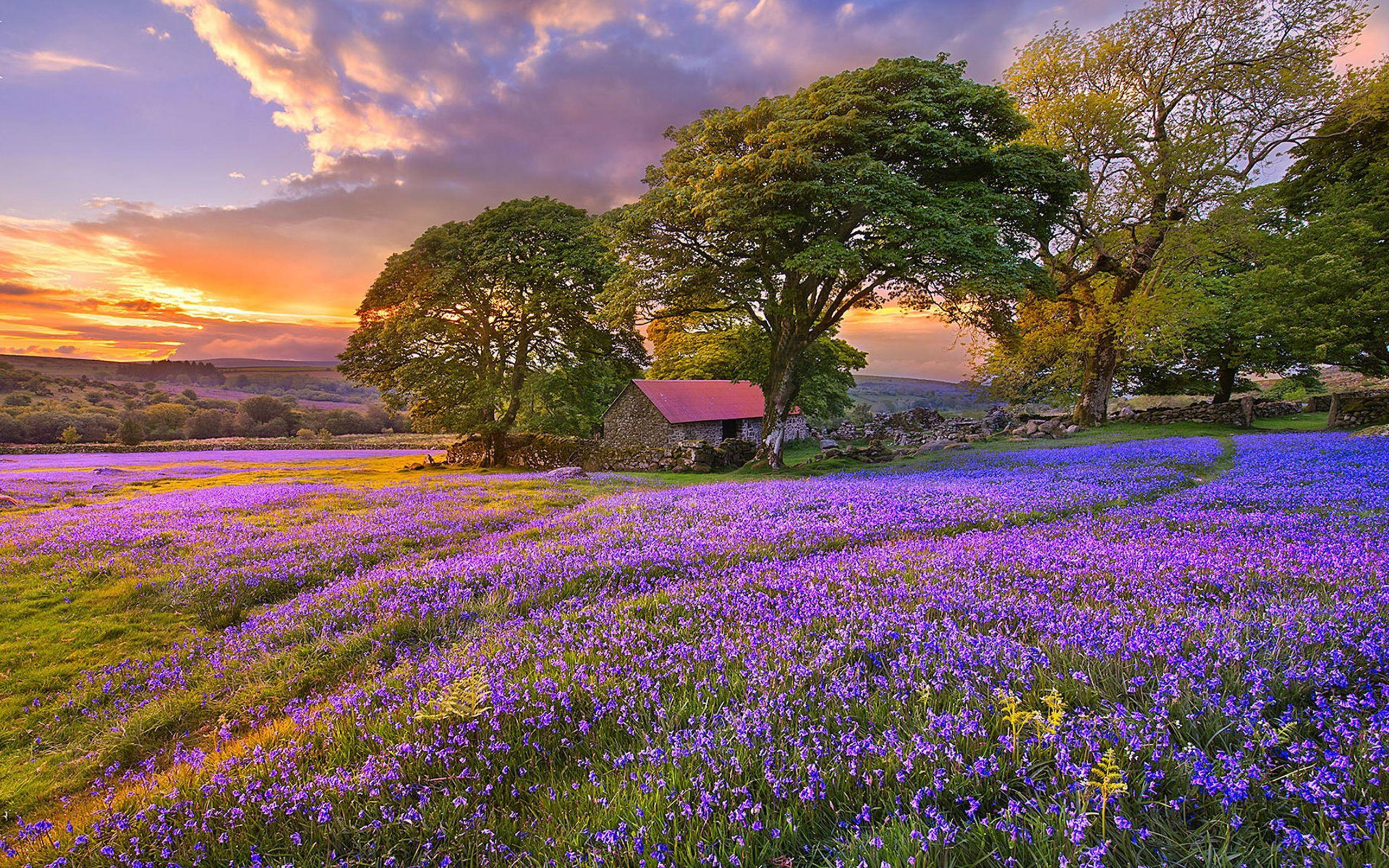 Sunset on the Flower Field HD Wallpapers | Flower Fields ...