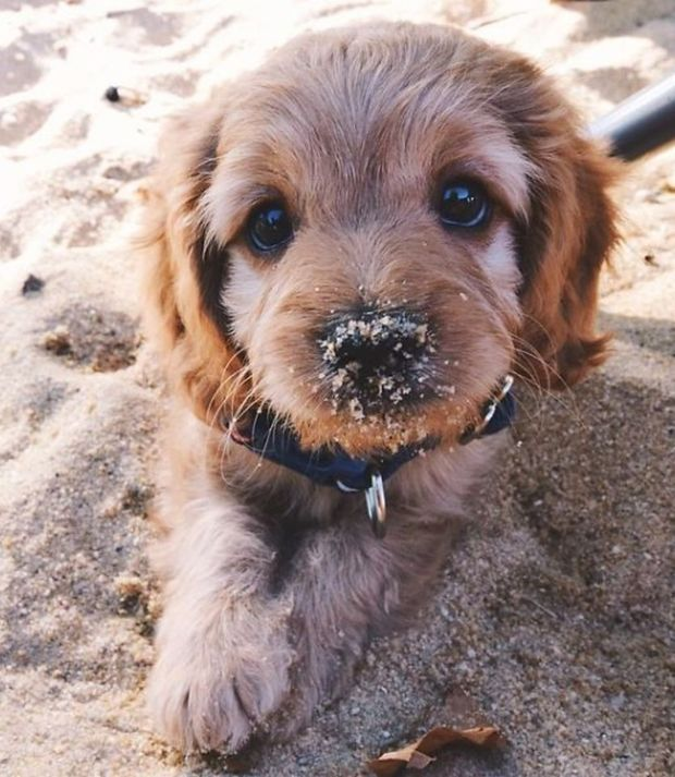 Photo of Puppies – Isn't he hugging with his sand covered snout?