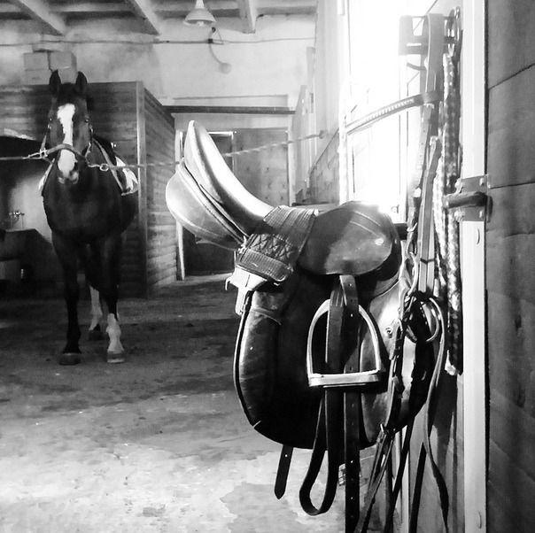 Конь, седло, конюшня...