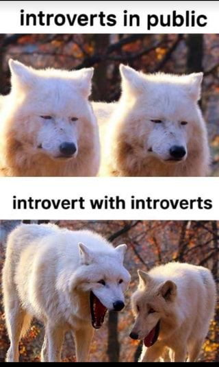 Introverts in public - )