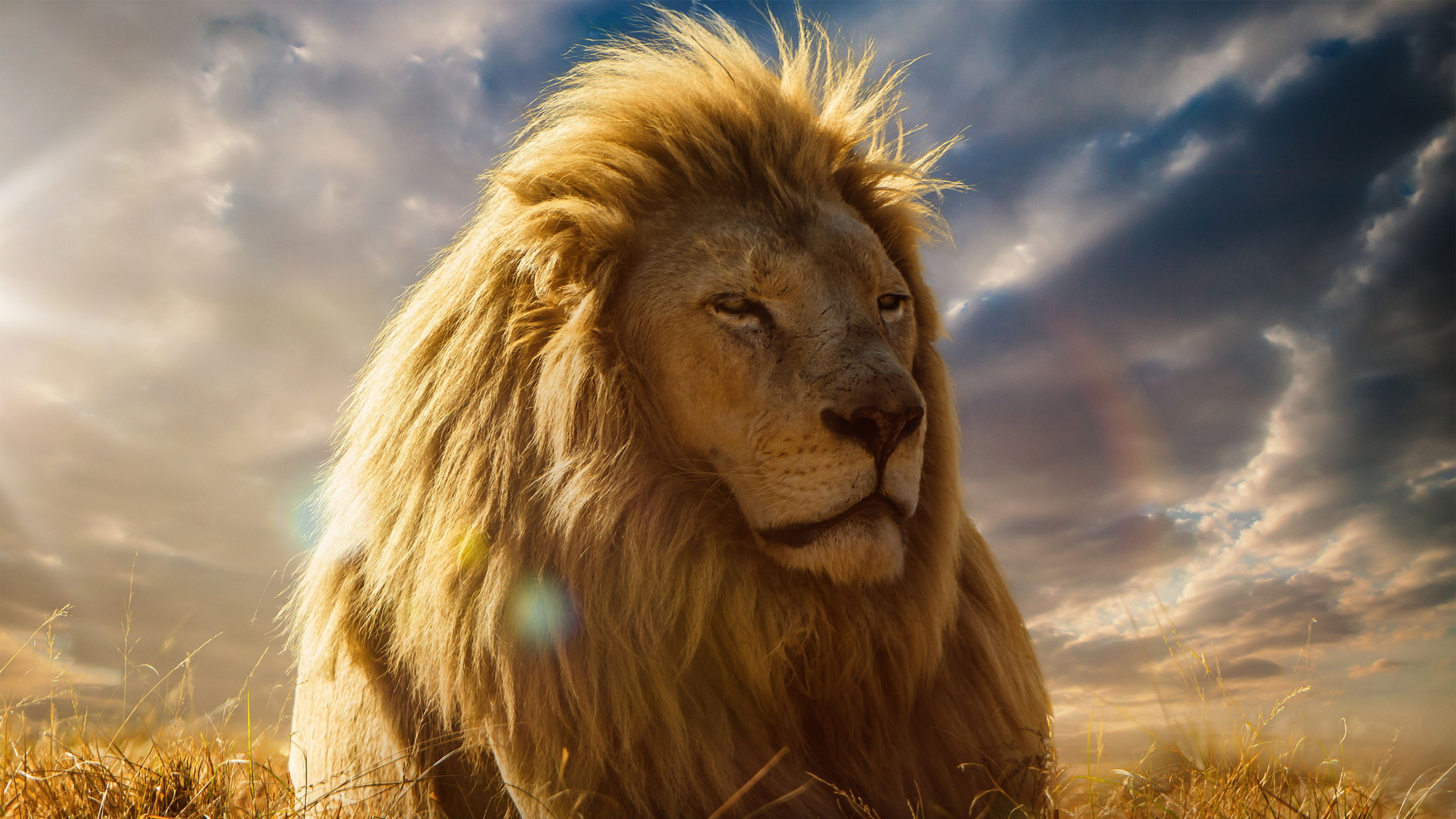 K Ultra HD Lion Wallpapers HD Desktop Backgrounds x