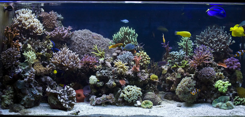 Los mejores acuarios marinos del mundo sea life for Peces marinos para acuarios pequenos