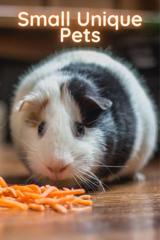 Small Unique Pets In 2020 Hamster Life Unique Animals Pets