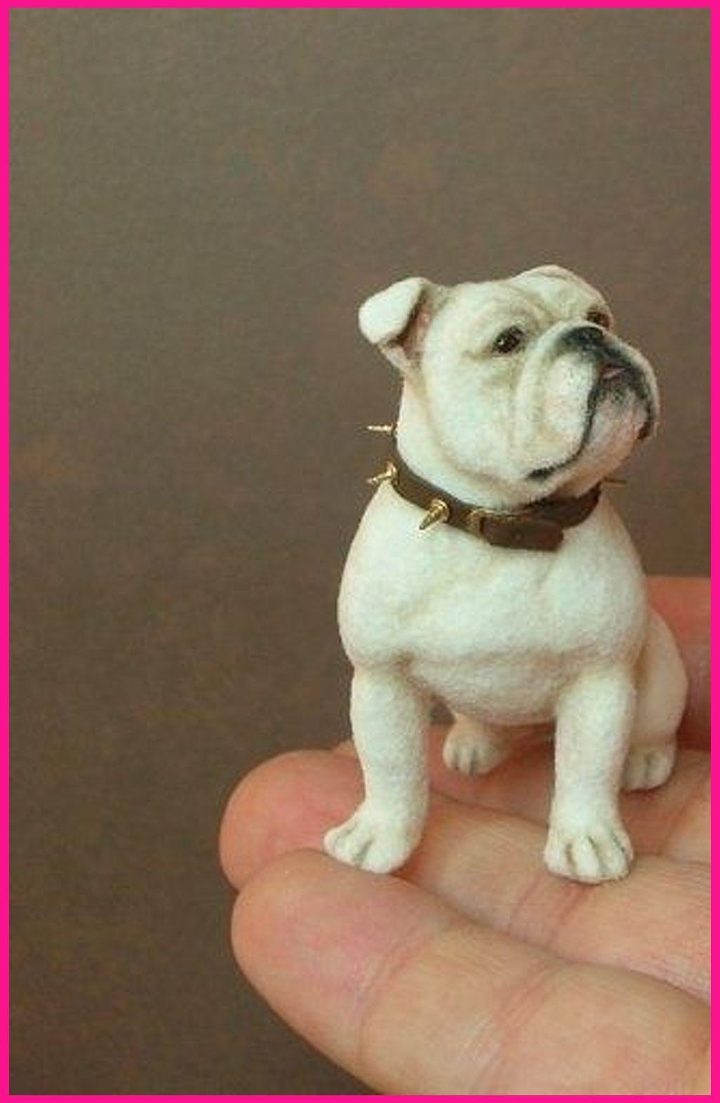 See More Concepts About French Bulldog Bulldog Puppies And French Bulldog Puppies Akita The Merle French Bulldog On Facebook Merle French Bull In 2020