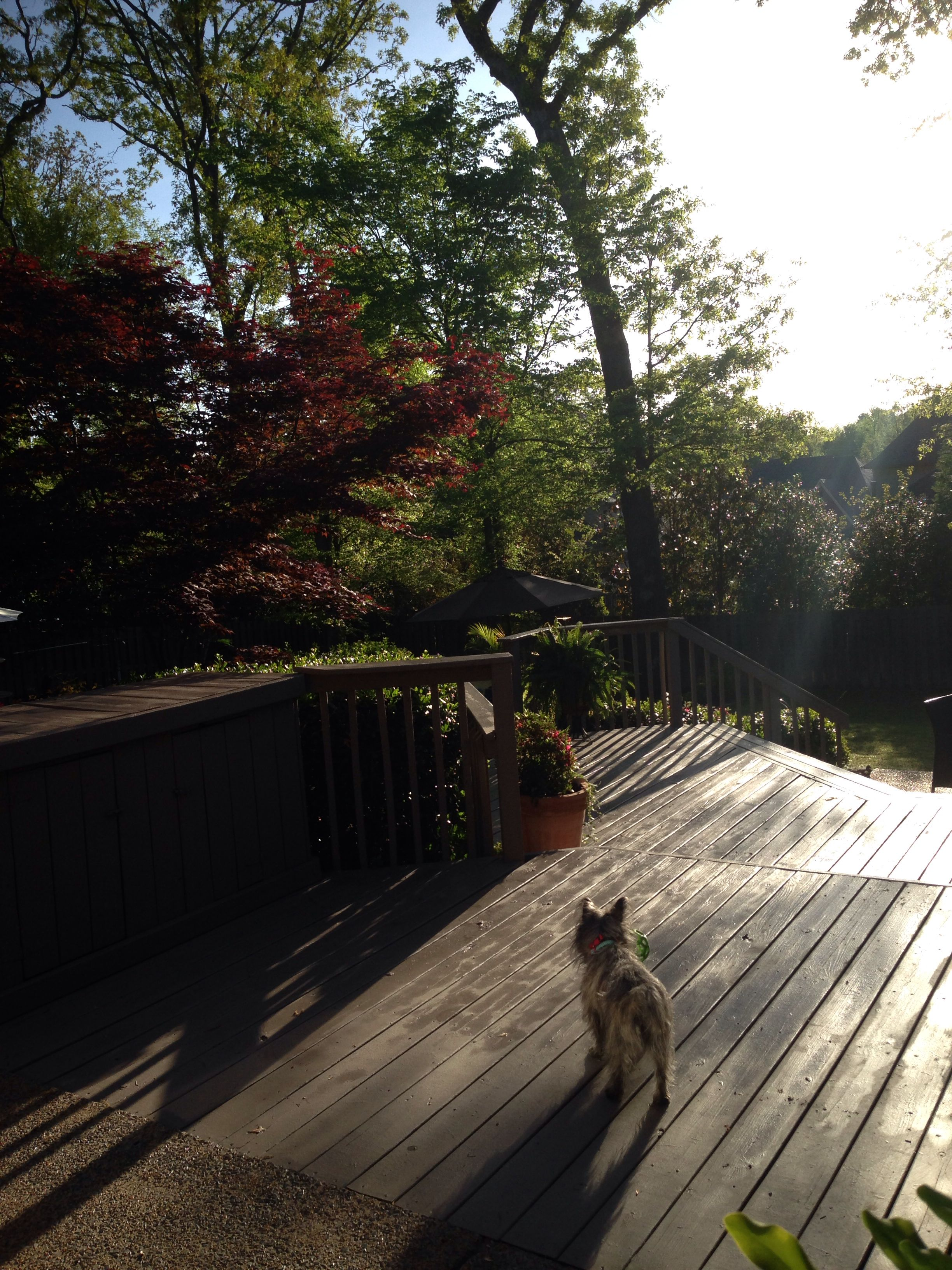 Behr Restore Deck Paint Really Does Fill In The Cracks And