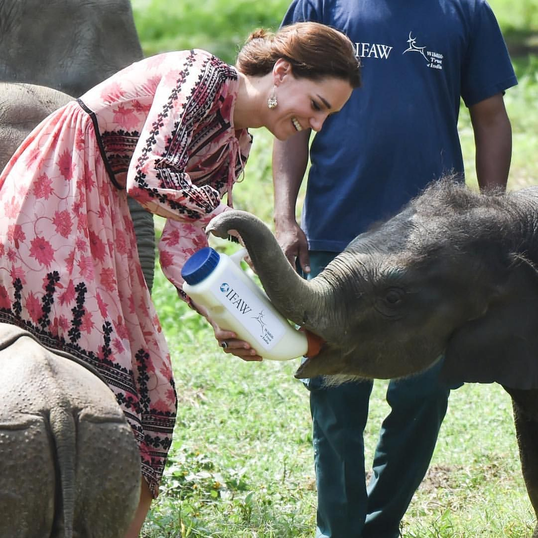 Regular humans feed their cats. Kate Middleton feeds baby ...