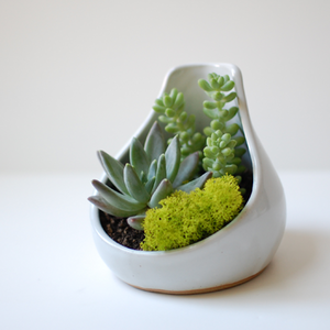 Terrariums, succulents, gorgeous little pots with clean lines... These are all great items with which to green-ify a small space. Theyre tiny, aesthetic, and require minimal care. This is a quick, inexpensive project to brighten up any chilly winter day!