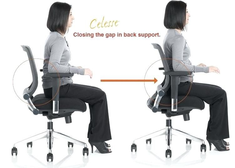 Make Use Of Back Support Office Chair Yonohomedesign Com