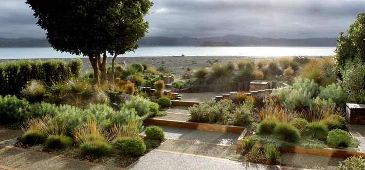long narrow site for a coastal garden used indigenous shrubs coastal grasses with paving to