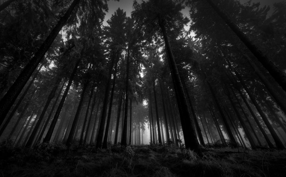 Black And White Forest Hd Wallpaper Dark Wood Wallpaper Dark Wallpaper Black And White Landscape