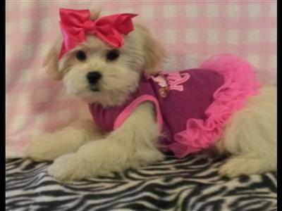 Puppies For Adoption Cingard Yahoo Com Puppy Adoption Puppies