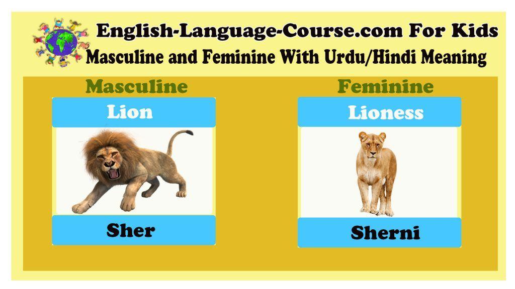 Lion Lioness Gender Examples Masculine And Feminine List Masculine Feminine