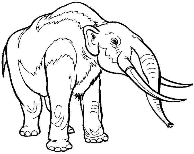 Dinosaur Coloring Pages Dinosaur Coloring Pages Animal Coloring