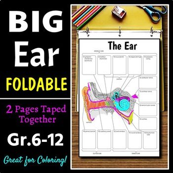 Ear foldable big foldable for interactive notebooks or binders ear foldable big foldable for interactive notebooks or binders ccuart Choice Image