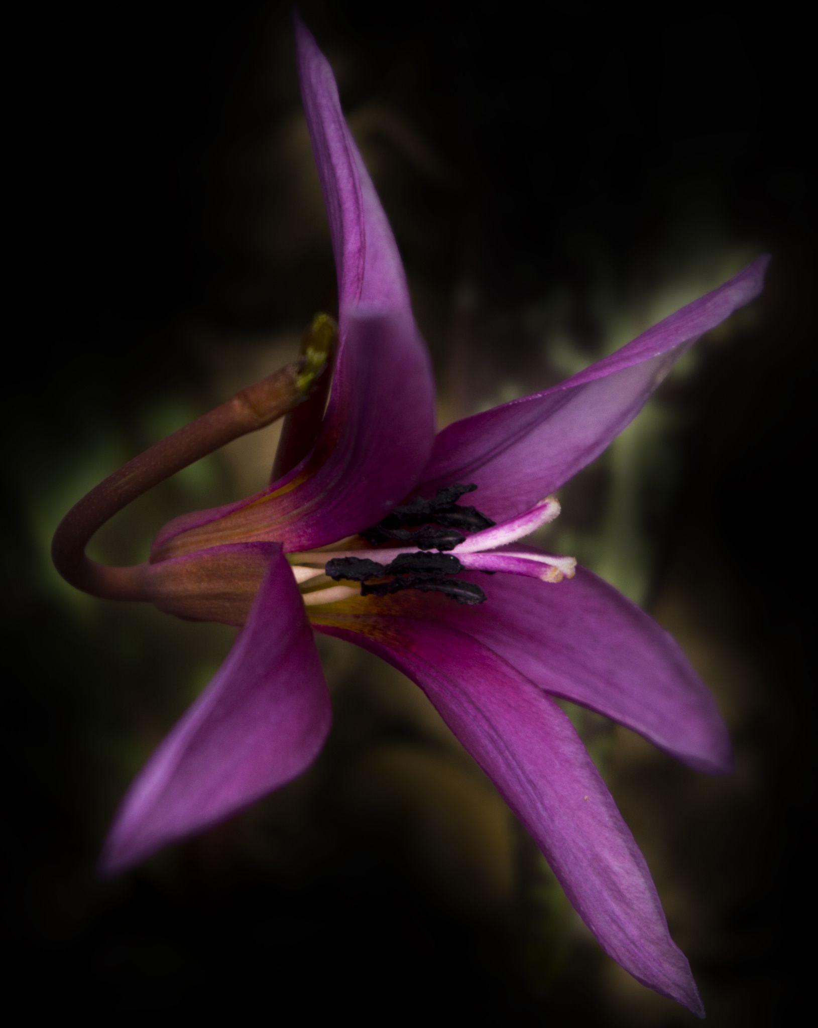 Flower By Attila Adam On 500px All The Pretty Flowers
