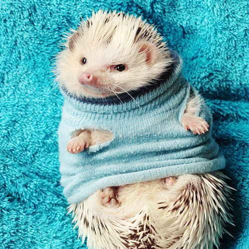 Animals in sweaters and your daily dose of awwww