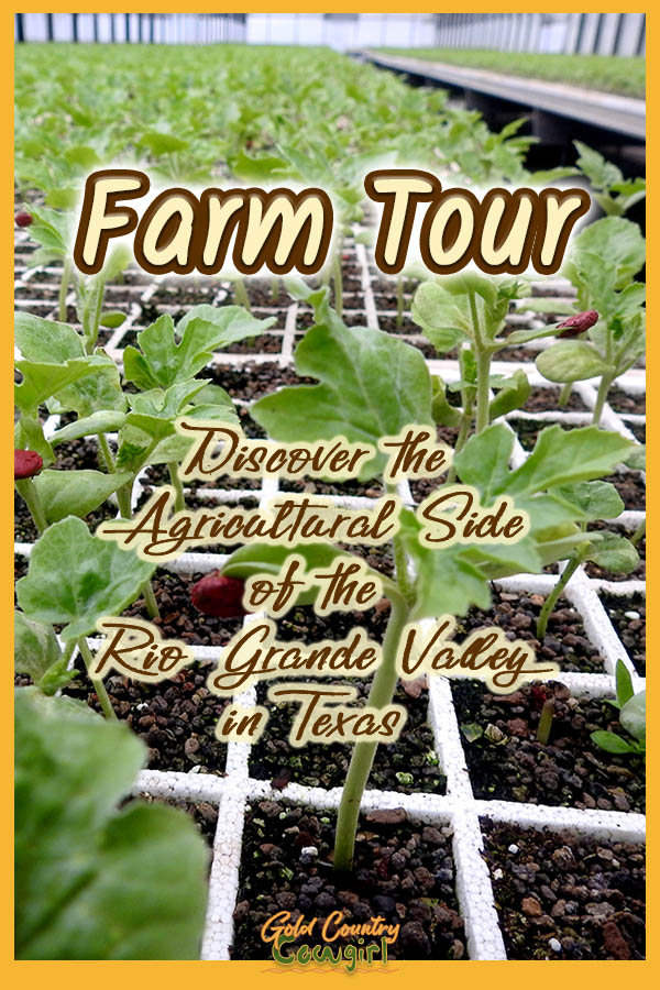 Discover The Agricultural Side Of The Rio Grande Valley On A Farm Tour Gold Country Cowgirl In 2020 Farm Tour Rio Grande Rio Grande Valley