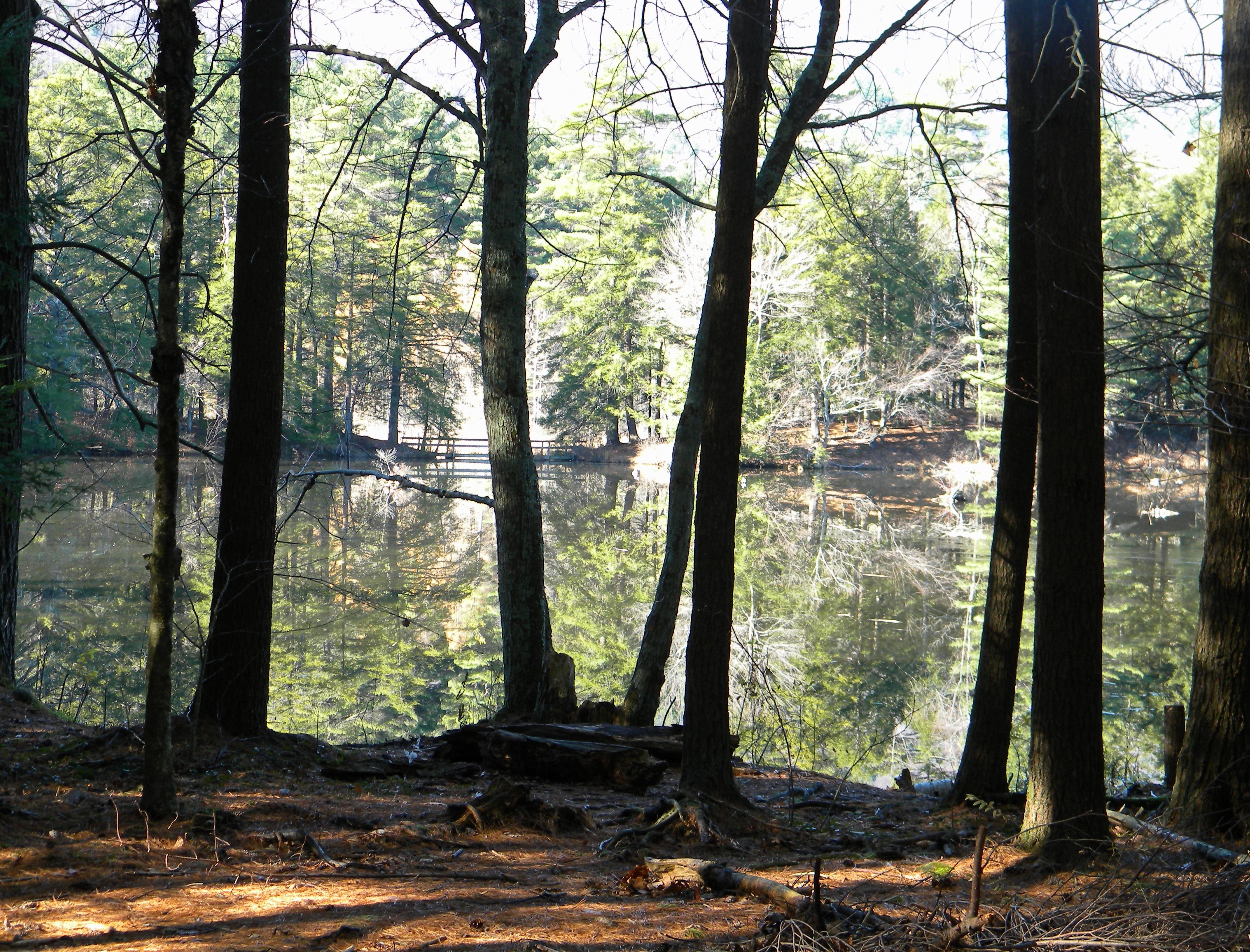 Photo of shaftsbury lake vermont by sue freebern