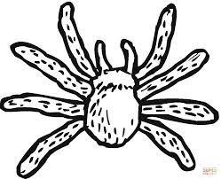 afbeeldingsresultaat voor spin kleurplaat peuters herfst