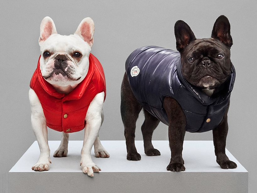 moncler launches a line of luxury puffer jackets for dogs