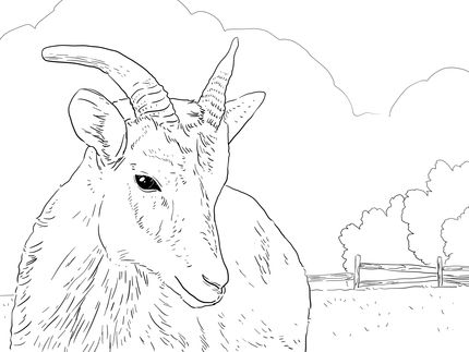Click To See Printable Version Of Female Big Horn Sheep Coloring