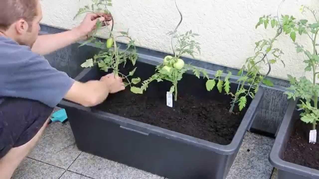 Tomatenkübel aus Mörtelkasten selber bauen - Eine reiche Ernte auf kleinem Platz #tomatenpflanzen