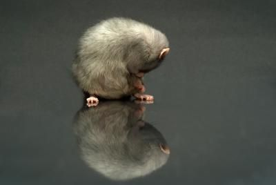 Smells That Repel Rats   bye bye pests   Rats, Rat