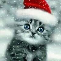 Ahhhhh Katze Weihnachten Weihnachtskatzen Weihnachten Tiere