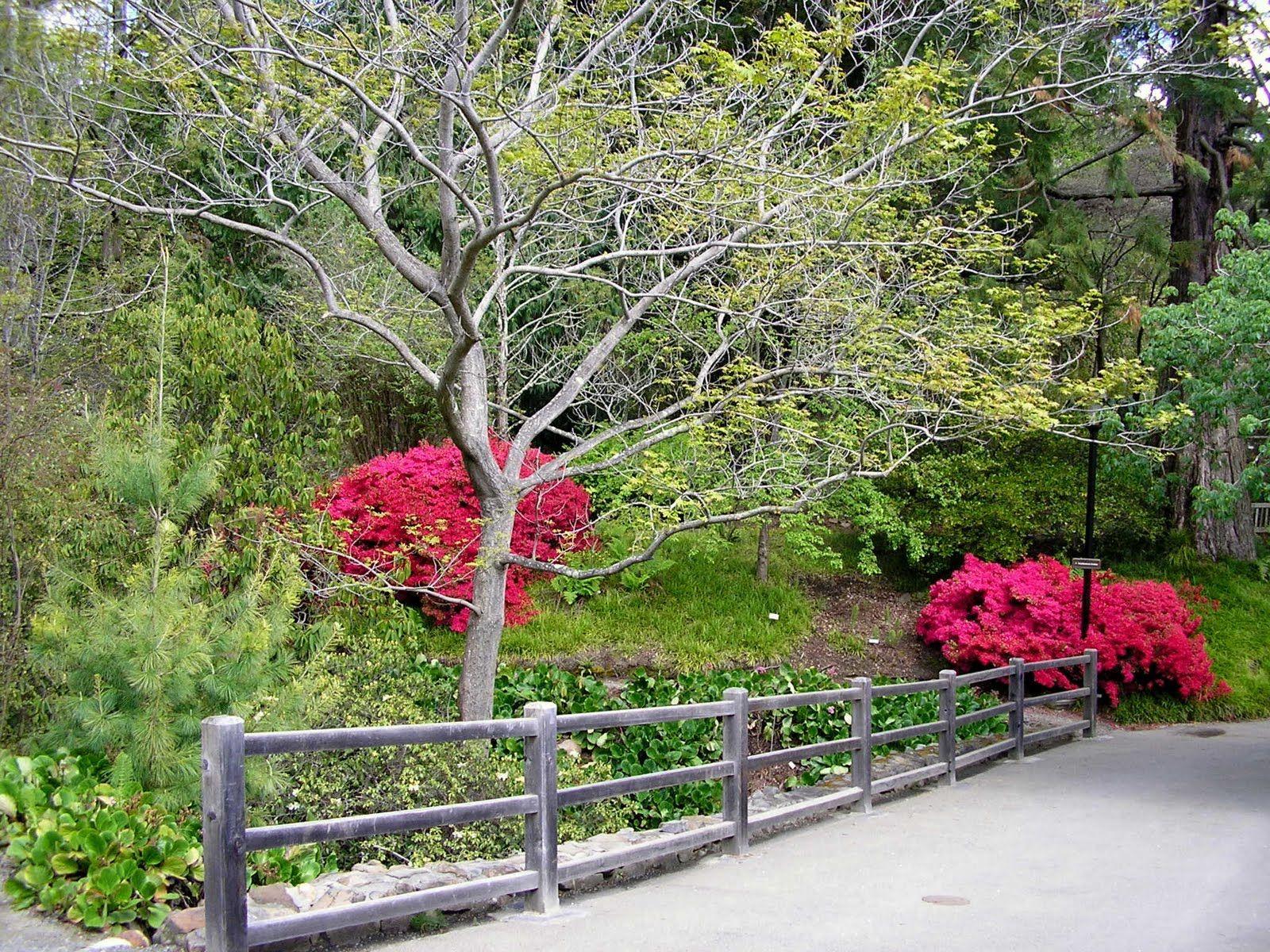 Gardens Just prettyand peaceful Garden Zen
