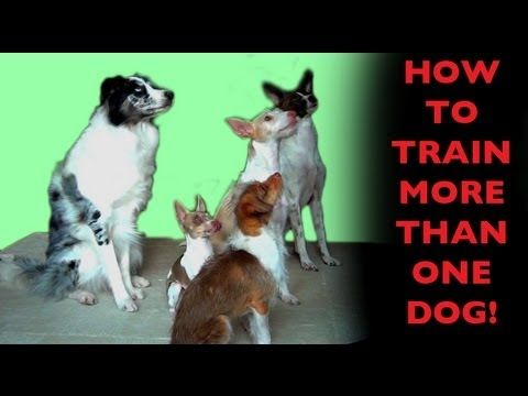 How To Teach Dogs To Wait For Their Turn Dog Training